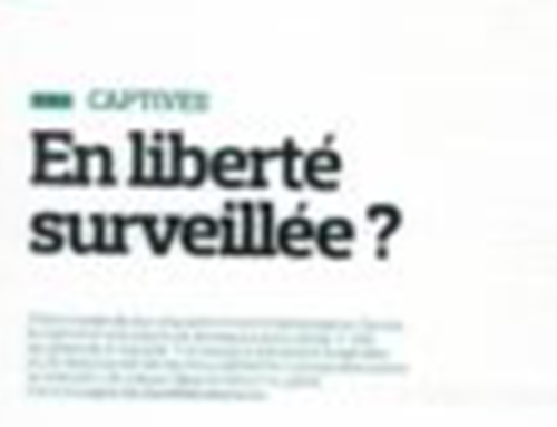 The insurance captive on probation? Interview with Patrice Kalfon in the Insurance Tribune